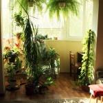 как обустроить зимний сад на балконе