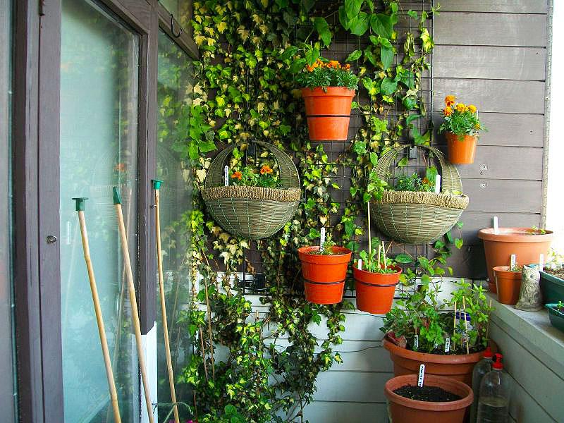 Сад на балконе своими руками фото