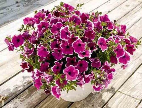 букеты с роз мелко цветок фото