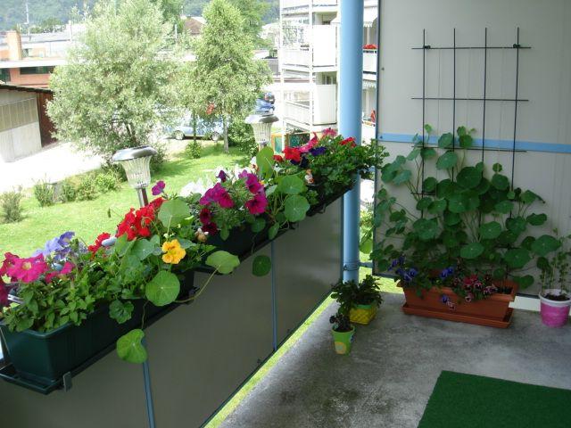 настурция на парапете балкона