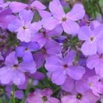 какие цветы посадить на балконе солнечная сторона