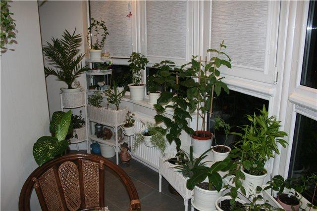 Сад на балконе своими руками 24