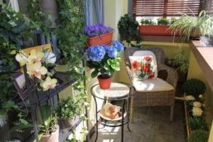 цветы для стиля прованс