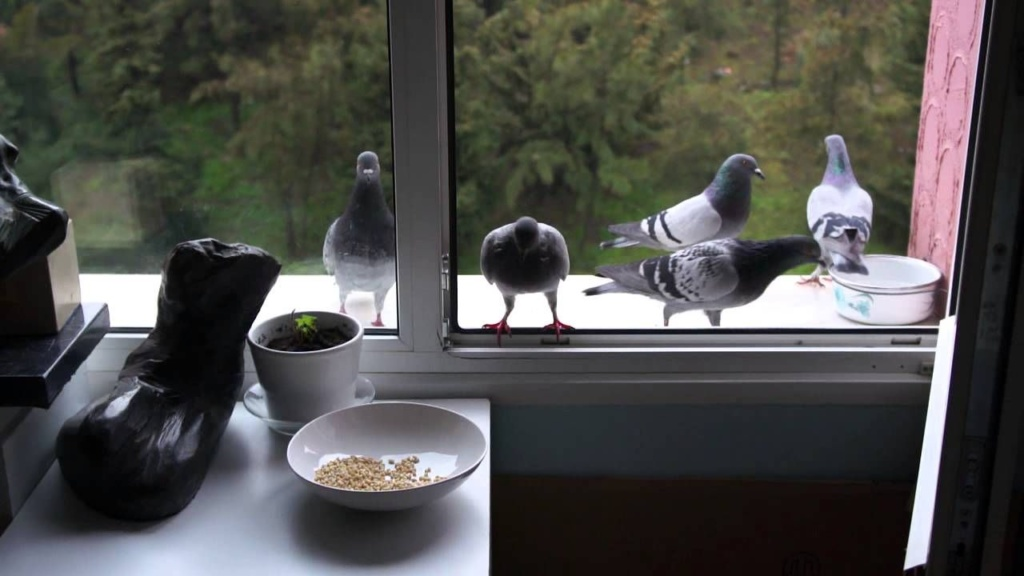 еда для голубей