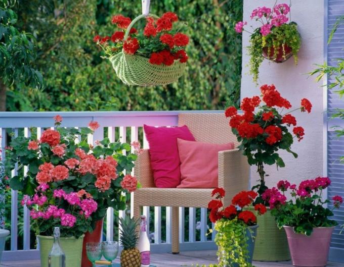 цветы для южной стороны