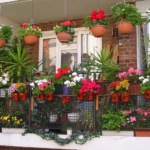 красивый балкон с цветами