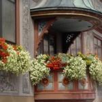 ампельные цветы на круглом балконе