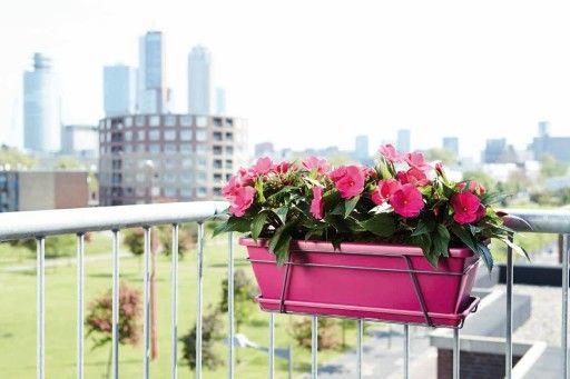 цветы на балконе в ящиках