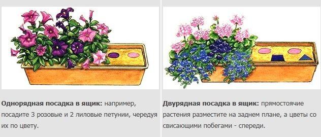 посадка растений в ящик